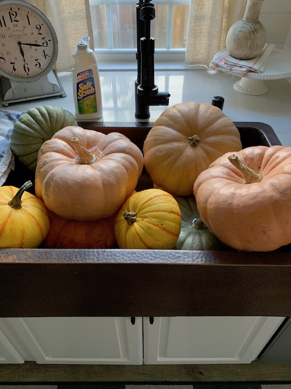 prevent pumpkins from rotting